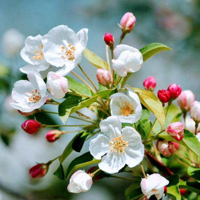 Вітаємо з початком весни!